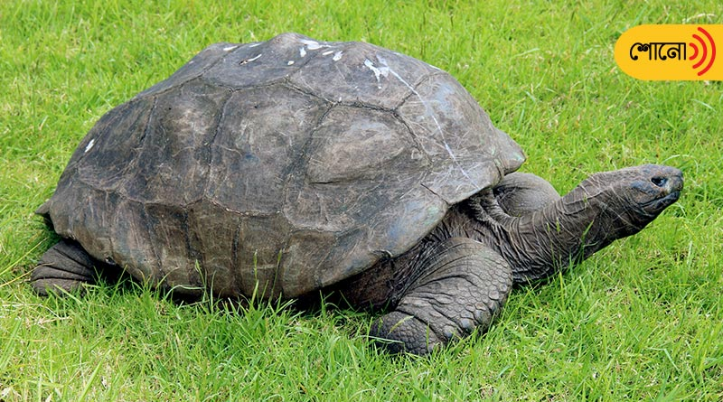 Jonathan the tortoise: It is the world's oldest living animal