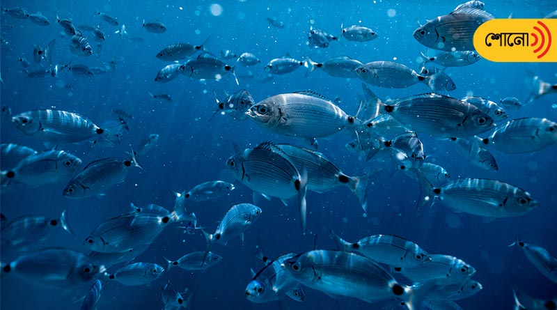 Fishes become addicted to drugs as drugs get mixed in sea-water