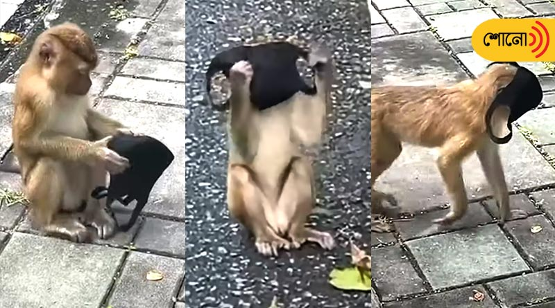 Monkey finds a mask, wears it like humans, Video goes viral