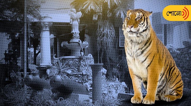 Maharaja of Krishnanagar had two pet tigers in Nadia House