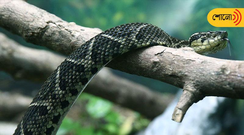 snake venom prevents corona virus in monkey cells