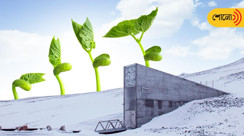 world's Seed Vault preserves all kind of seeds for future